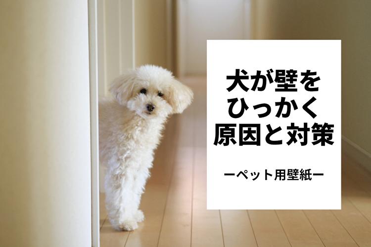 こちらを覗き見る犬