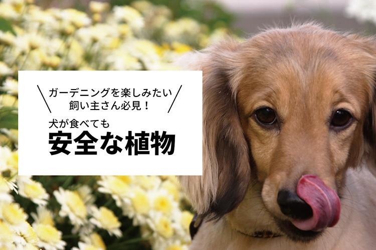 舌なめずりをする犬