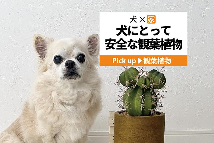 サボテンと犬